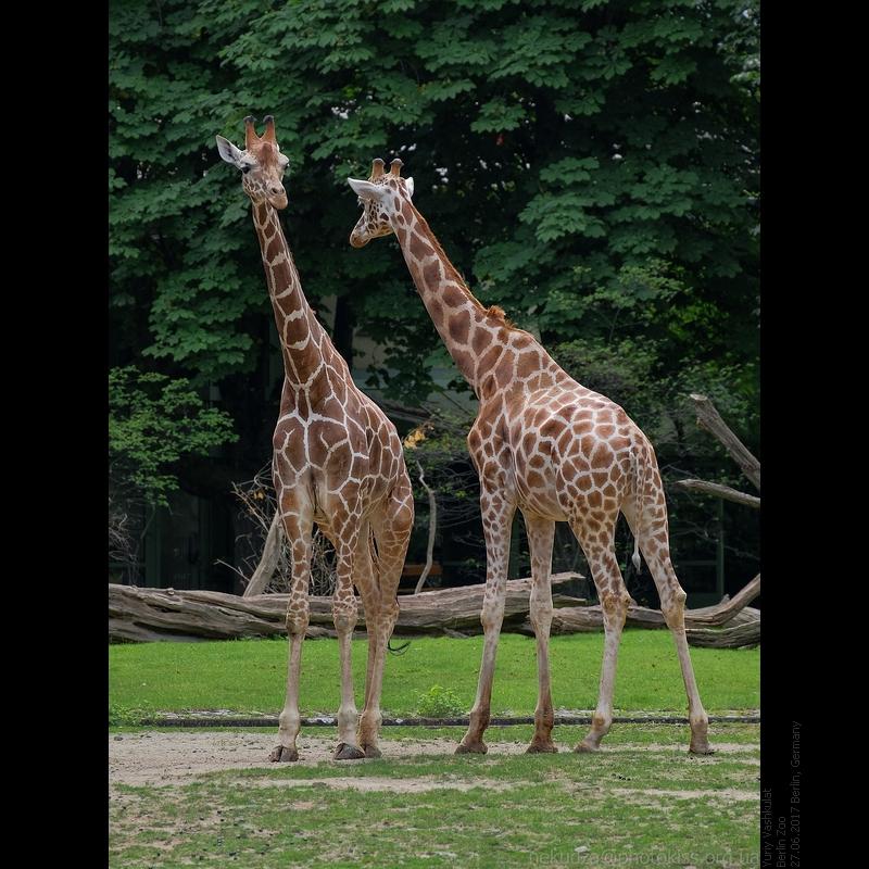 Берлинский зоопарк фотографии
