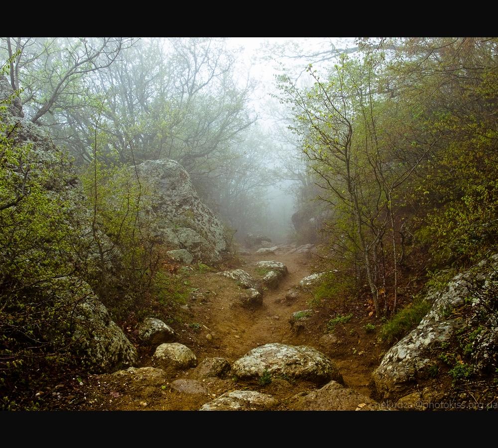 Крым: лесная тропа