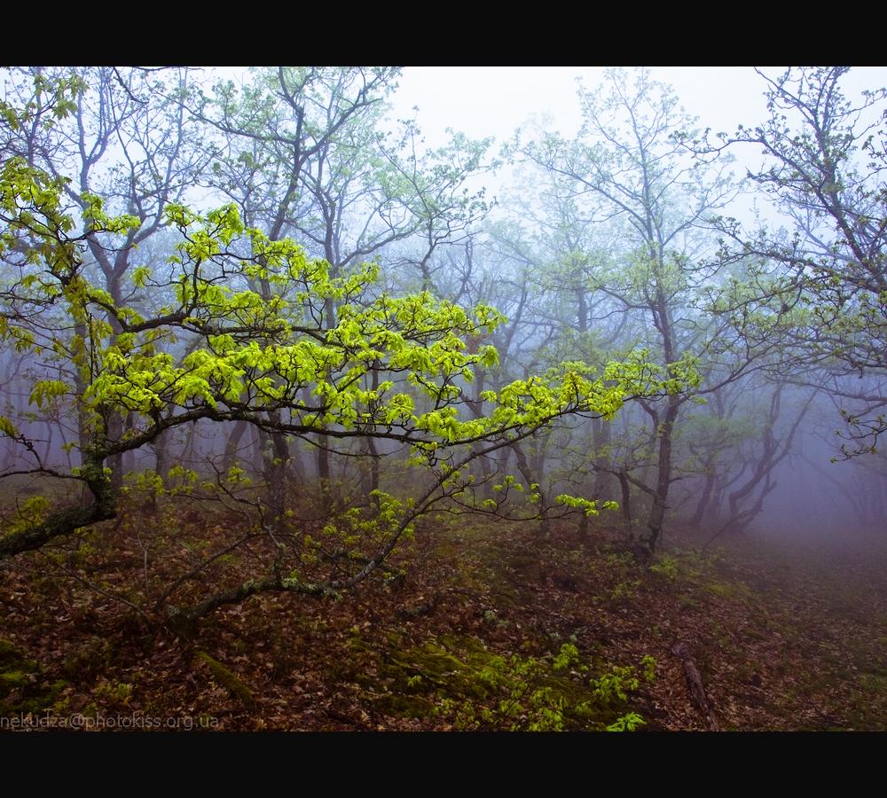 Фотографии Крыма: туман на склонах Демерджи