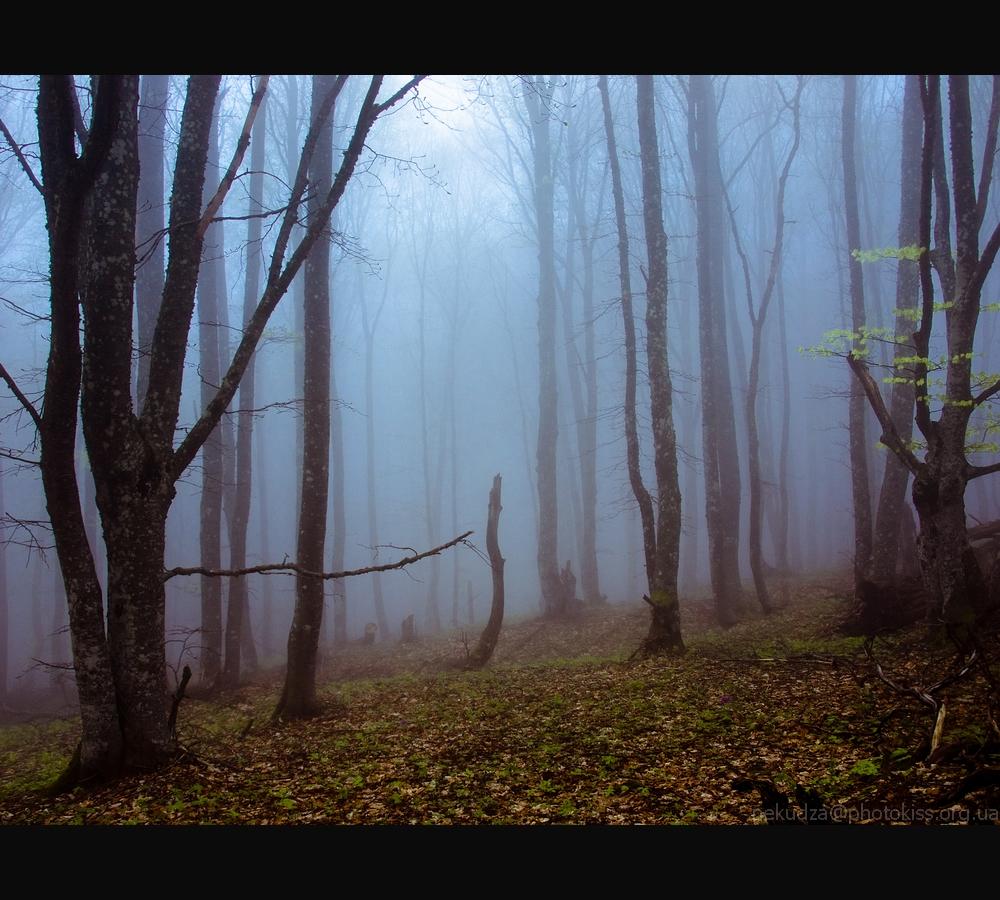 Фотографии Крыма: лес на Тырке