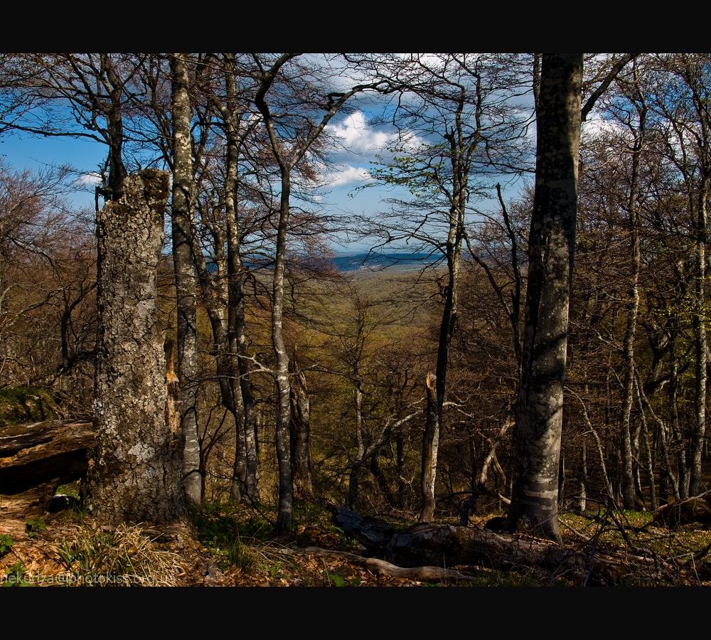 Фотографии Крыма: лес на Демерджи