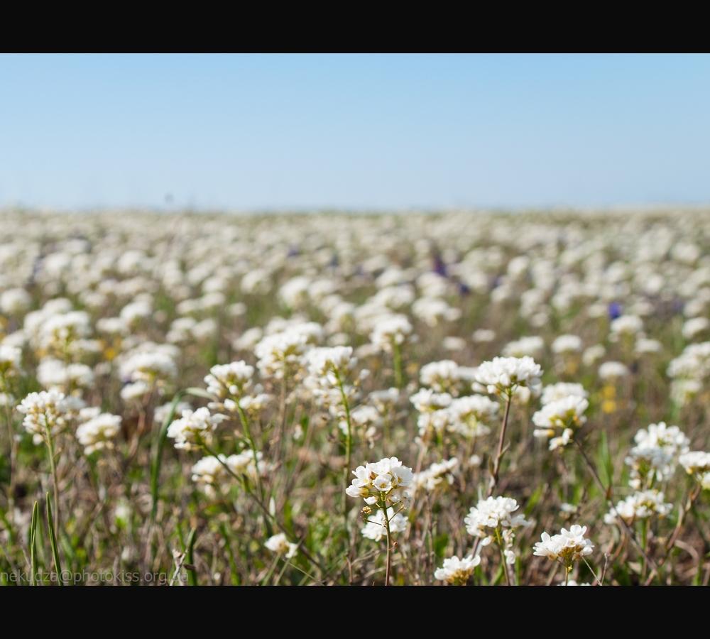 Цветущий луг на Орта-Сырте