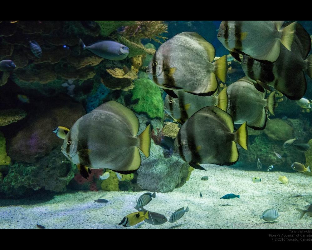 Аквариум Торонто. Фауна коралловых рифов